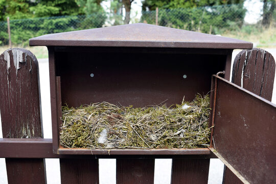 Building of a nest of black redstart (Phoenicurus ochruros) in a mailbox in spring 2018 - a nest is made up of moss, straws, leaves, roots and feathers
