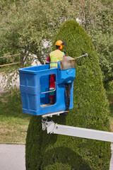 Gardener pruning a cypress on a crane. Seasonal