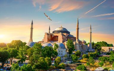 Bird in Istanbul