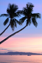Scenic palm trees silhouettes at dusk. Boracay island. Western Visayas. Philippines