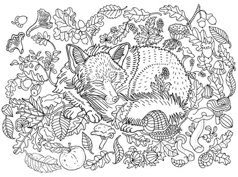 Cute sleeping fox among leaves, nuts, mushrooms, flowers and berries. Environment, nature, forest, meadow, plants. Anti stress coloring book page, postcard, hand drawn children's illustration.