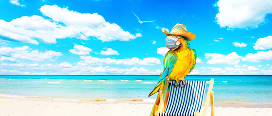 Macaw parrot with medical mask on vacation