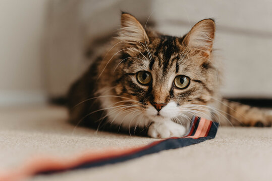 A young cat playing with a string