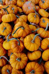 A pile of pumpkin squash