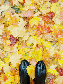 Staying in a fallen leaves