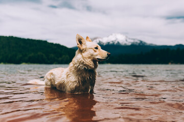 Husky Swimming In A Lake