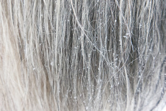 Snowflakes on grey horse manes