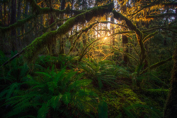 Olympic National rainforest
