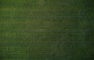 Bir's Eye View Of Green Wheat Crop