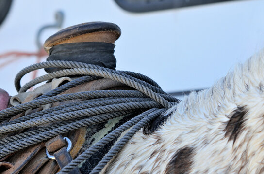 Closeup of saddle horn with lariat on a western roping saddle.