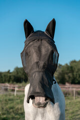 Portrait of racing horse with blinder
