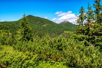 Coniferous trees and hills in Western Tatras, Slovakia