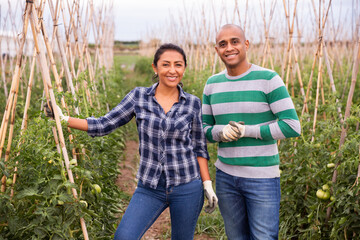 Portrait of couple of farmers next to tomato seedlings on the field