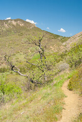 Spring Landscape with path in forest in Karadag nature reserve, Crimea, Ukraine.