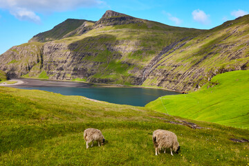 Picturesque green landscape with lambs in Faroe islands. Saksun