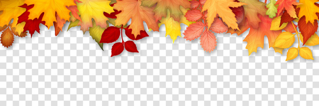 Autumn frame with colorful leaves on transparent background. Vector illustration