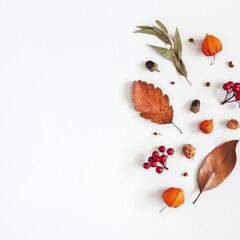 Autumn composition. Physalis flowers, eucalyptus leaves, rowan berries on white background. Autumn,...