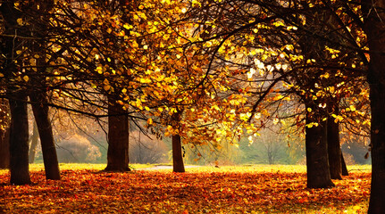 Beautiful Nature Autumn landscape on Sunny day