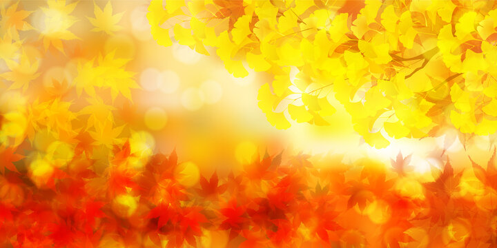 紅葉 イチョウ 秋 背景