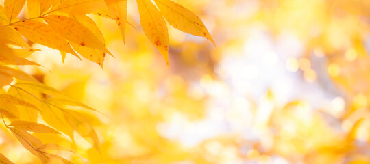 Autumn background with orange, yellow leaves and golden sun lights, natural bokeh. Fall nature landscape with copy space