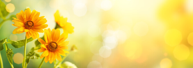 Beautiful yellow flowers on blurred background with bokeh and copy space. Autumn or summer festive natural background.