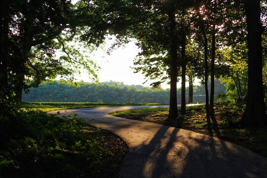 sunset in the park