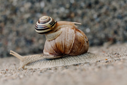 two snails moving in different directions