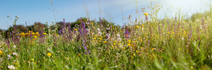 Wild flowers in the meadow with sun rays.. Summer wildflowers in nature.
