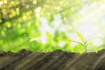 business growth concept from small tree on soil with sunshine and bokeh background