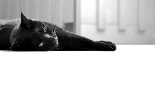 A black cat relaxing