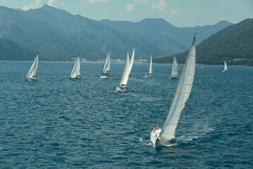 Wall Mural - Sailing yacht race. Ships yachts with white sails in the open sea.