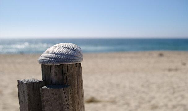 Concha pousada no topo de um pau de uma vedação de uma praia com a praia e o mar de fundo em segundo plano