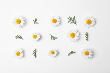 Flat lay composition with fresh chamomiles on white background