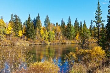 Bright yellowed forest on the banks of the Irkut River on a sunny autumn day. Beautiful landscape. Natural background. Siberia, Buryatia, Baikal region, Tunka Valley