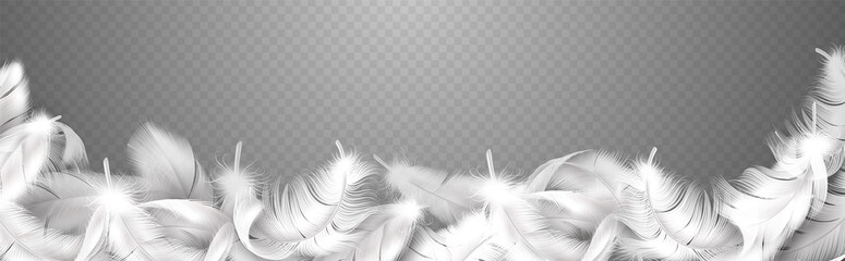 White feathers. Realistic frame with fluffy bird plume, falling softness goose or swan close up plumage, style smooth border for banner poster or flyer vector isolated illustration
