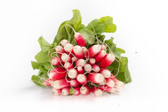 Botte de radis rouge