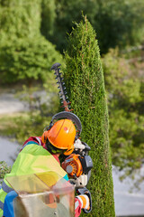 Gardener pruning a cypress with a chainsaw on a crane