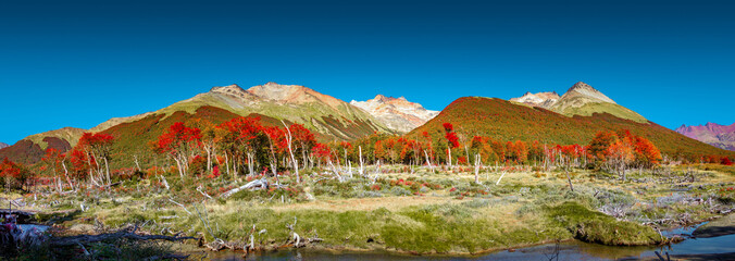 Panoramic view over magical austral forest, peatbogs dead trees,