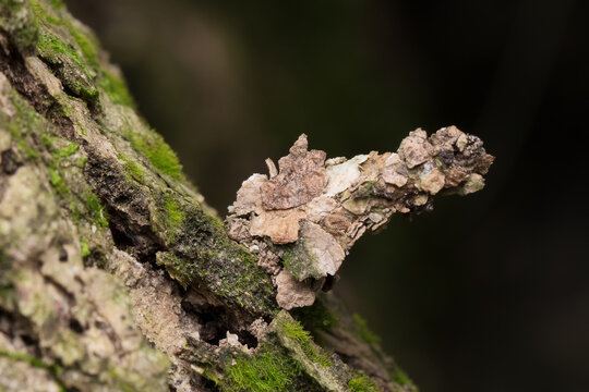 Camouflaged bagworm moth caterpillar on bark of tree