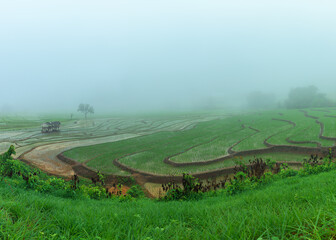 Panoramic view house and terraced rice paddy field in Chiangmai, Thailand.