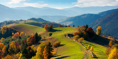 mountainous rural landscape in autumn. fields on rolling hills. fence along the path. trees in colorful foliage. wonderful scenery in afternoon with bright sly.