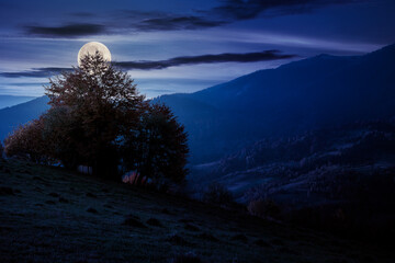 autumnal rural landscape at night. beautiful countryside in mountains. trees in fall foliage on green rolling hills. dramatic clouds above the distant ridge