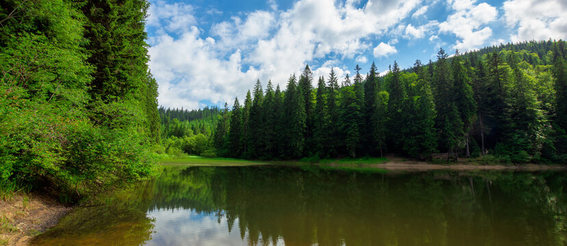 scenery around the lake in mountains. spruce forest on the shore. reflection in the water. sunny weather with clouds on the blue sky