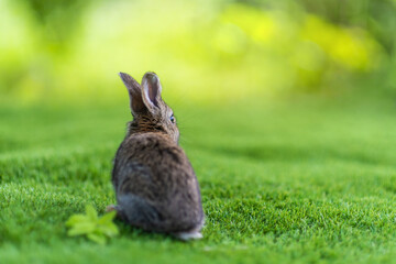 view from back of rabbit on a green grass in summer day. Cute little Easter bunny in the meadow. Green grass under the sunbeams. little hare dreaming on the grass.