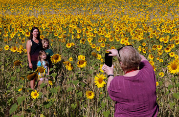 People pose for a picture in a field of sunflowers, amid the coronavirus disease (COVID-19) outbreak, in Chorleywood