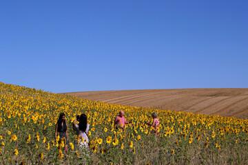 People walk in a field of sunflowers, amid the coronavirus disease (COVID-19) outbreak, in Chorleywood