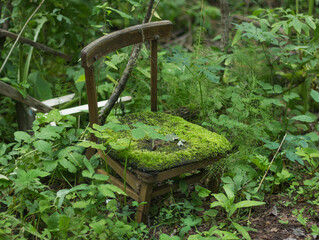 An old broken chair stands alone in a thicket of green forest