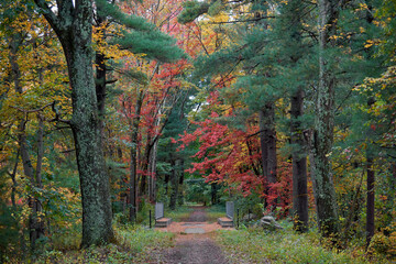 Path in a forest in Massachusetts, USA