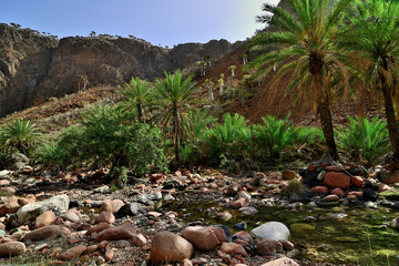 The oasis Wadi Daerhu on the island of Socotra Yemen