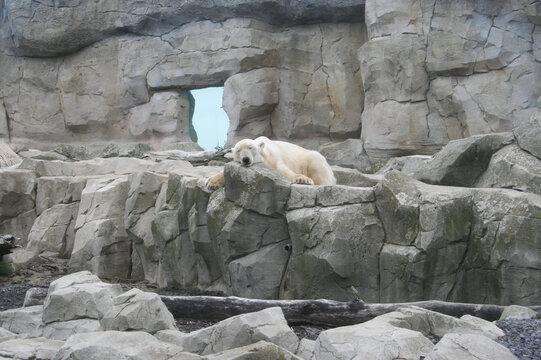 Eisbär im Zoo am Meer, Bremerhafen 2011